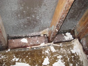 mold removal henderson