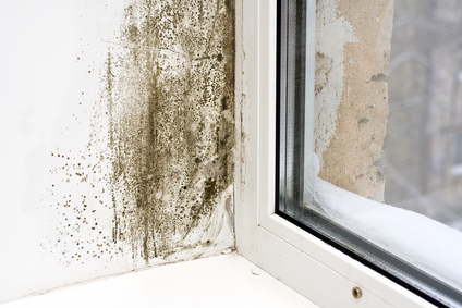 mold removal las vegas, mold cleanup las vegas, mold repair las vegas, mold prevention las vegas