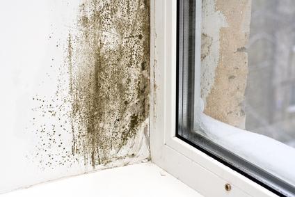 mold removal las vegas, mold cleanup las vegas, mold repair las vegas, mold prevention las vegas